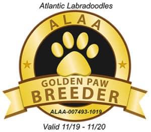 ALAA GOLDEN PAW